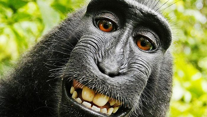 Monkey Ape Selfie