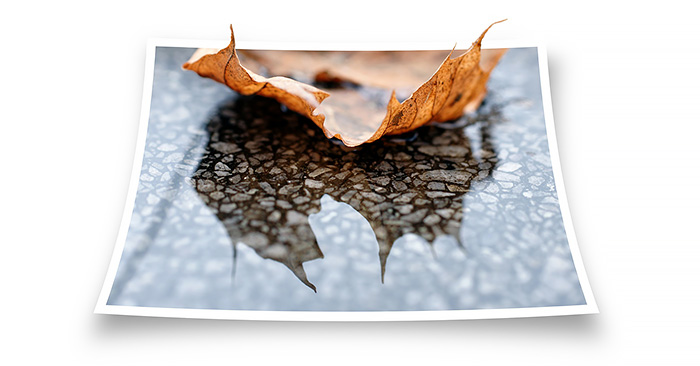 leaf_mirror_reflection