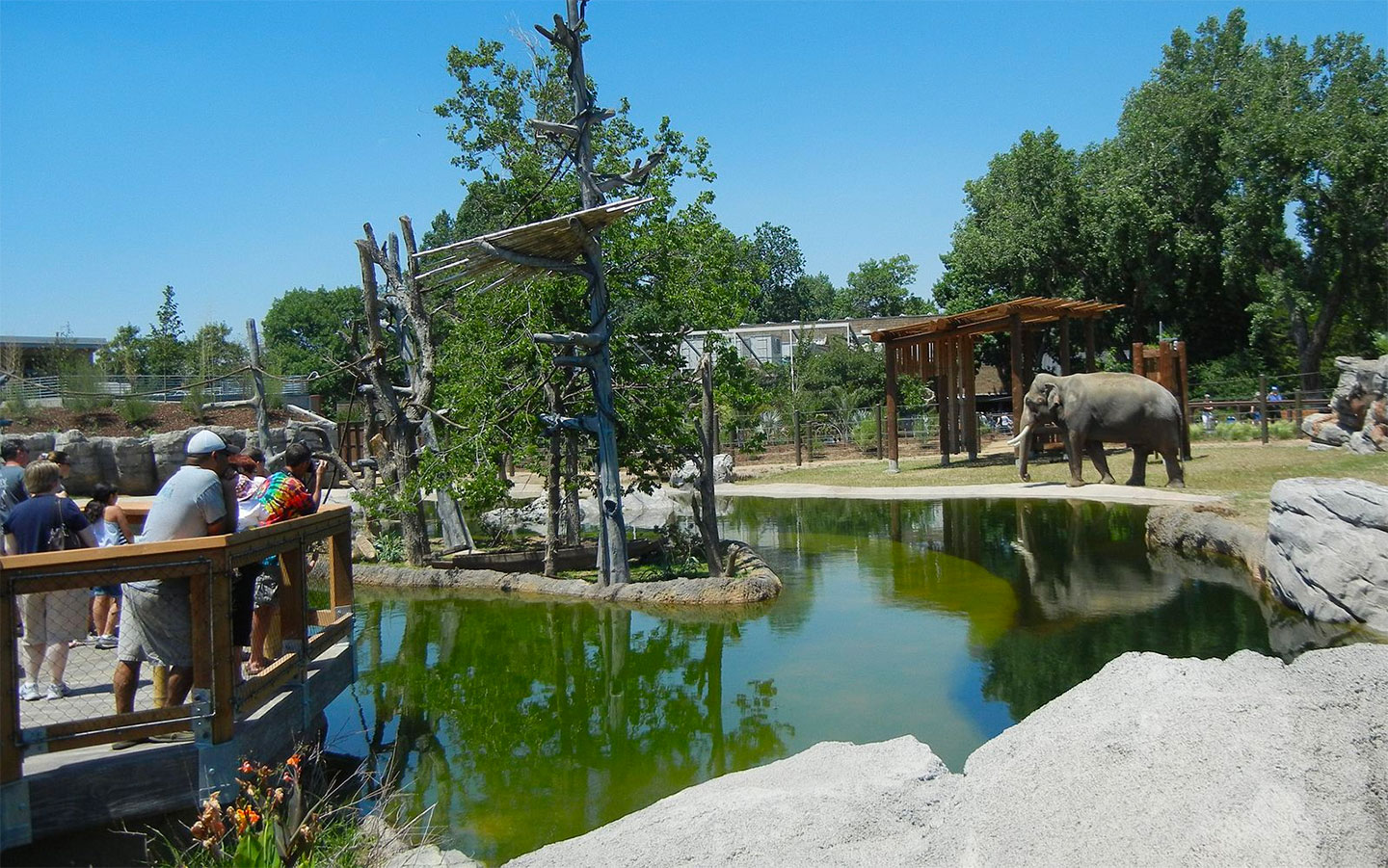 Things to Do in Denver - Denver Zoo